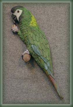 """Dobby"", Yellow Collar Macaw"